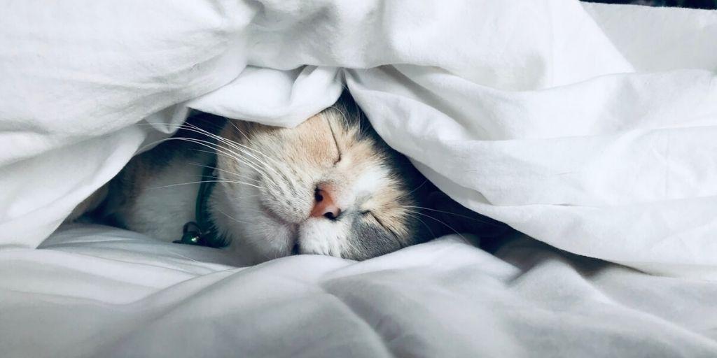 Bed beschermen kattenharen